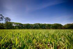 有树丛的草坪在背景中在与稀稀落落的云彩的蓝天下 库存照片