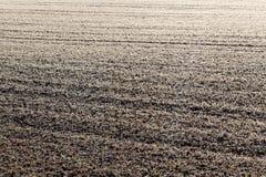 有树冰的一个草甸 免版税图库摄影