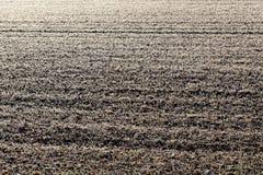 有树冰的一个草甸 免版税库存图片