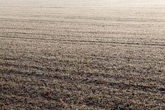 有树冰的一个草甸 库存图片