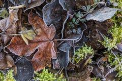 有树冰的秋天湿叶子 免版税库存照片