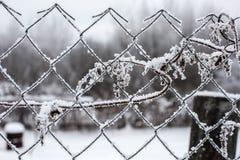 有树冰的篱芭 免版税库存图片