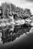 有树反射的池塘在水 库存照片