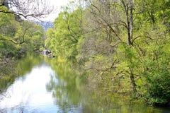 有树反射的湖在活力谷水坝背景 免版税库存图片