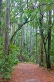 有树和寄生藤机盖的森林道路  免版税图库摄影