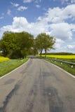 有树和开花的,黄色菜子领域路 图库摄影