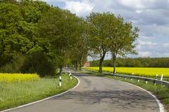 有树和开花的,黄色菜子领域路 库存照片