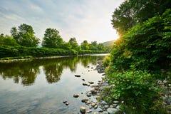 有树和日落的绿河乐队 免版税库存图片