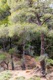 有树和根的森林 免版税图库摄影