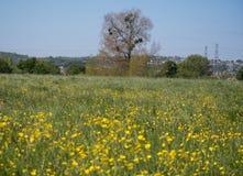有树和槲寄生的草甸 免版税图库摄影