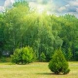 有树和草的绿色公园 免版税库存照片