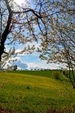 有树和蓝天的蒲公英草甸 库存图片