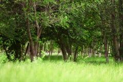 有树和野草的绿色公园 免版税库存照片