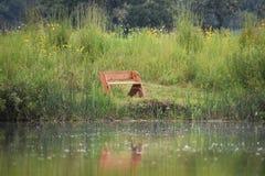 有树和长凳的反射的湖 免版税库存照片