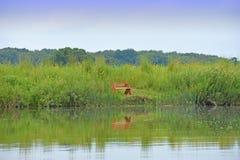 有树和长凳的反射的湖 免版税库存图片