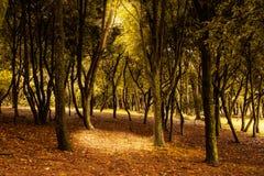 有树和阳光的神秘的森林 库存图片
