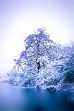 有树和冻池塘的冬天公园 免版税库存照片