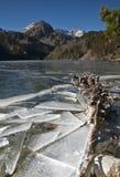 有树干的冻结湖 库存照片