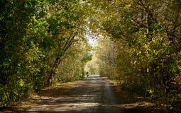 有树曲拱的路  免版税库存图片