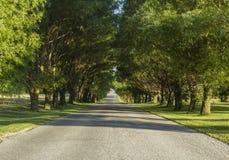 有树木天棚的乡下公路 库存图片