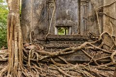 有树根的老佛教寺庙 图库摄影