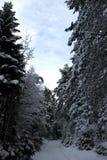 有树的一条积雪的森林道路 图库摄影
