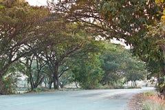 有树的乡下公路 库存照片