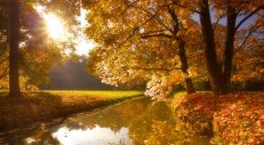 有树的公园在秋季时间 库存图片
