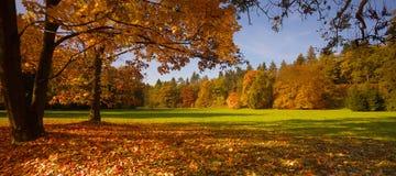 有树的公园在秋季时间 免版税库存图片