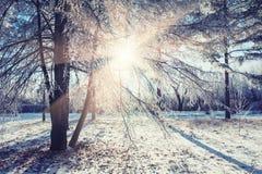 有树的冬天公园在日落 免版税库存图片