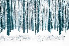有树的冬天森林盖了雪 库存照片