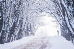 有树的冬天胡同和一个人的剪影在期间的末端降雪 库存照片