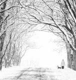 有树的冬天胡同和剪影有一条狗的妇女在期间的末端降雪 库存图片