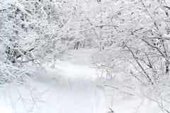有树的冬天胡同 免版税库存照片
