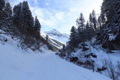 有树的冷漠的多雪的在Stubai阿尔卑斯山的道路和山 库存图片