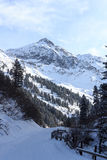 有树的冷漠的多雪的在Stubai阿尔卑斯山的道路和山 免版税库存图片