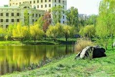 有树的反射的河 库存照片
