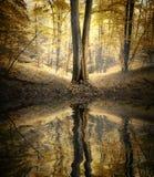 有树的反射的湖在一个五颜六色的森林里在秋天 图库摄影