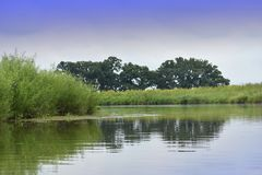 有树的反射的湖 库存照片