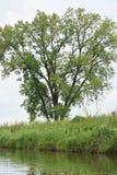 有树的反射的湖 免版税库存照片