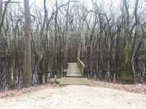 有树的反射的船坞 免版税库存照片