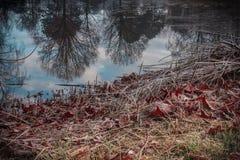 有树的反射的镇公园在池塘 免版税库存图片