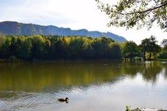 有树的反射的Autumn湖 免版税库存图片