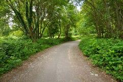 有树的土路在爱尔兰 免版税库存图片