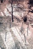 有树的城市公园 免版税库存照片