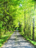 有树的夏天道路 库存照片