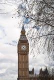 有树的大本钟在伦敦 库存图片
