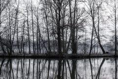 有树的小海岛在湖中间 免版税库存图片