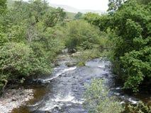 有树的快速流动的河 库存图片