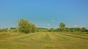 有树的新近地被割的草甸在Kalkense Meersen自然reerve,富兰德,比利时的清楚的蓝天下 库存照片